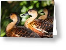 Wandering Whistling Ducks Greeting Card