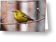Warbler - Pine Warbler - Oh So Yellow Greeting Card