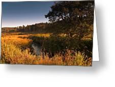 Warm Morning Sun. The Trossachs National Park. Scotland Greeting Card