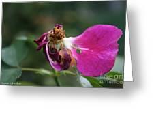 Warrior Rose Greeting Card