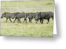 Warthogs In Masai Greeting Card