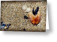 Washed Up Greeting Card by Lisa Knechtel