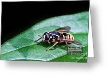 Wasp Break Greeting Card