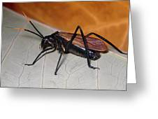 Wasp Mimic Bush Cricket Greeting Card