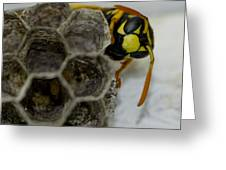 Wasp Nest Greeting Card by Dean Bennett