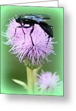 Wasp On Lavender Wildflower  Greeting Card by Maureen  McDonald