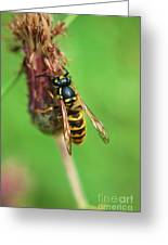Wasp On Plant Greeting Card