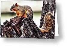 Watchful Squirrel Greeting Card