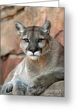 Watching Cougar Greeting Card