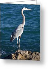Watching For Fish Greeting Card