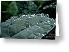 Water Beads Greeting Card