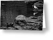 Water Birds Greeting Card