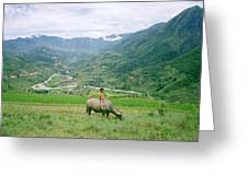 Water Buffalo Boy Greeting Card