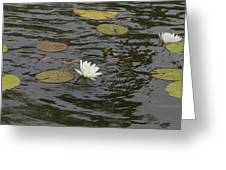 Water Circles On The Lily Pond Greeting Card