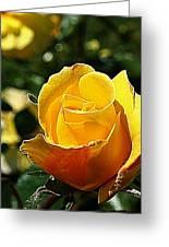 Water Color Paper Rose Greeting Card