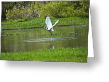 Water Dancer Greeting Card