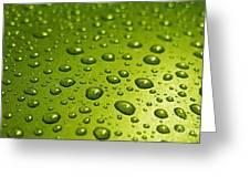 Green Card. Macro Photography Series Greeting Card