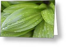 Water Drops On Green Leaf Greeting Card