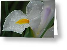 Water Drops Greeting Card