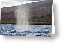 Water From A Whale Blowhole Greeting Card