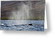 Water From A Whale Blowhole II Greeting Card