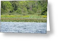 Water Landscape Greeting Card