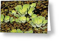 Water Lettuce Greeting Card