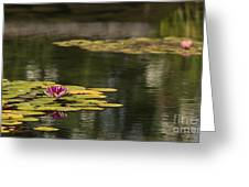 Water Lilies And Lily Pads Greeting Card