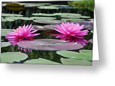 Water Lilies Greeting Card by Bill Cannon