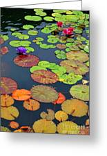 Water Lilies I Greeting Card