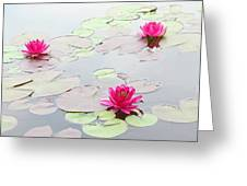 Water Lilies In The Morning Greeting Card by Michael Taggart