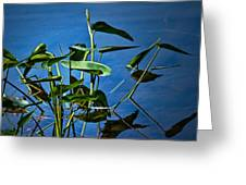 Water Lilies No.098 Greeting Card