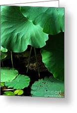Water Lilies Of Green Greeting Card