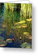 Water Lilies Reflection Greeting Card