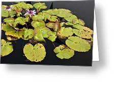 Water Lillies And Pads Greeting Card