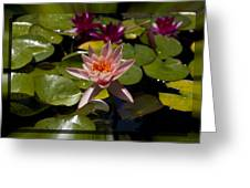 Water Lilly 6 Greeting Card