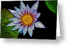 Water Lilly Paint Greeting Card
