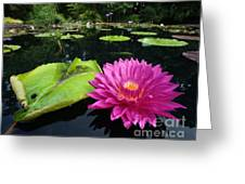Water Lilly Pond Greeting Card