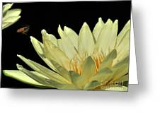 water lily 3 Yellow Water Lily with Bee Greeting Card