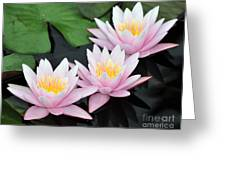 water lily 88 Sunny Pink Water Lily with Reflection Greeting Card