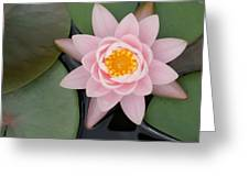 Water Lily Centered Greeting Card