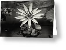 Water-lily  Greeting Card