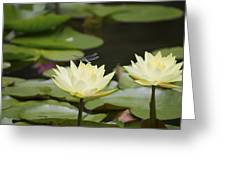Water Lily Dragonfly 2 Greeting Card