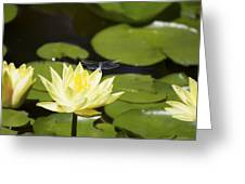 Water Lily Dragonfly Greeting Card