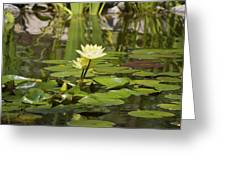 Water Lily Garden 1 Greeting Card
