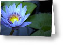 Water Lily Glow Greeting Card