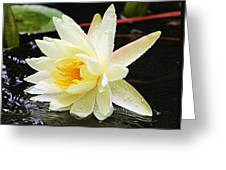 Water Lily In White Greeting Card
