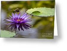 Water Lily Kissing The Water Greeting Card
