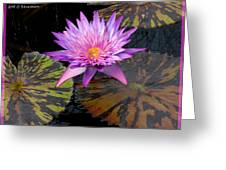 Water Lily Magic Greeting Card by M C Sturman