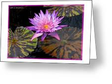 Water Lily Magic Greeting Card